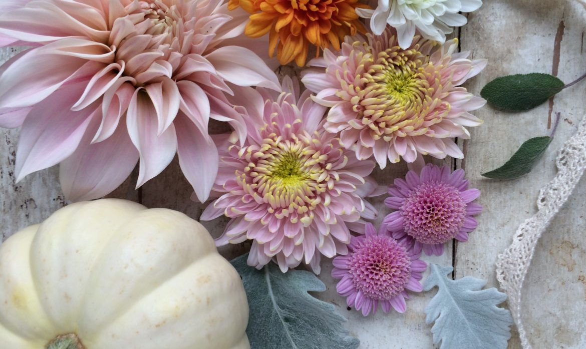 Heirloom Mums:  Back in Style