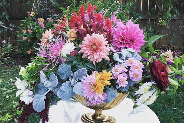 Heirloom Mums:  Thoughts After Second Year